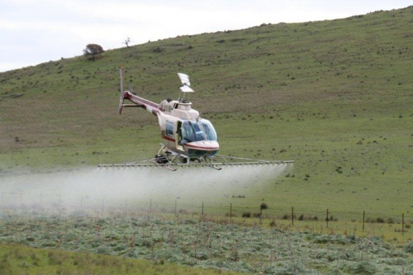 county-helicopters-Thistle-Spraying2