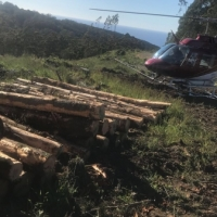 county-helicopters-Forestry16