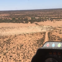county-helicopters-Mustering2