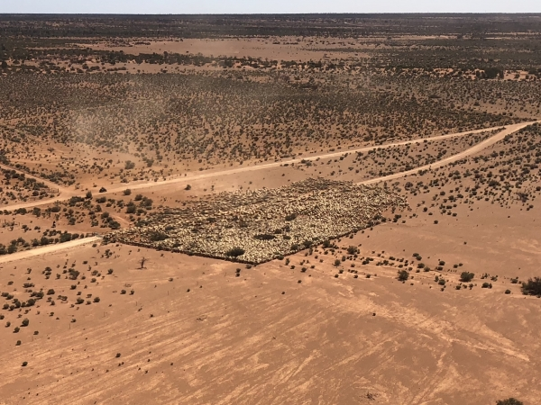 county-helicopters-Mustering1