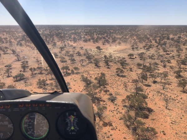 county-helicopters-Mustering3