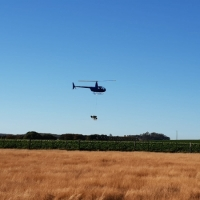 county-helicopters-Potato fertiliser spreading